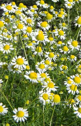 Пастель для фоамирана: масляная и сухая, как тонировать лучше молды